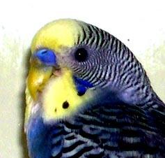 madarak parazitáinak kezelése)